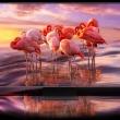 samsung-q90-levensecht-beeld-flamingo